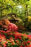 чай дома Стоковая Фотография RF