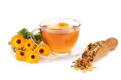 Чай Calendula при свежие и высушенные цветки изолированные на белой предпосылке Стоковые Изображения