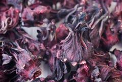 чай hibiscus стоковое фото