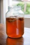 Чай Kombucha в стеклянном опарнике Стоковое Фото