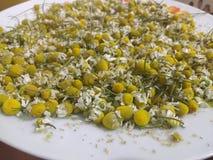 Чай Manzanilla стоковая фотография rf