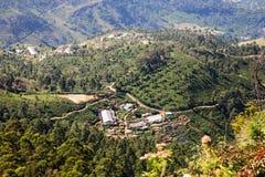 чай sri плантации lanka стоковое фото rf