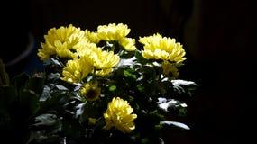 Чай Tereré с цветком Стоковая Фотография