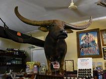 Чарли индийский буйвол стоковые фотографии rf
