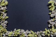 Частично белые и желтые стороны предпосылки черноты рамки цветка основывают Стоковые Изображения RF