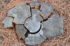 Части головоломки кольца дерева Стоковая Фотография RF