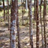 Части деревьев вокруг фото леса уникального стоковое изображение