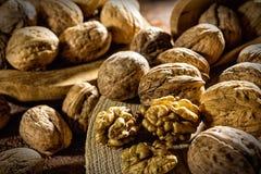 Части и раковины грецкого ореха Стоковые Фотографии RF