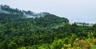 Части облаков в лесе на горе Стоковое Изображение