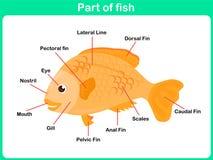 Части склонности рыб для детей - рабочего листа иллюстрация штока