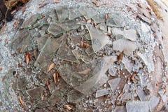 Части сломленного стеклянного положения на земле на бесчинствованном деле Стоковые Фотографии RF