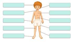 Части тела Стоковое Изображение RF