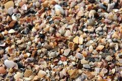 Части Seashell Стоковое Изображение