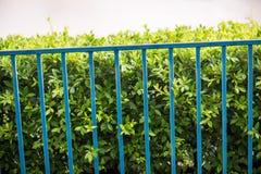 Частная собственность, серебряная картина загородки звена цепи с деревом на предпосылке Стоковое Фото