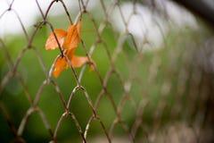 Частная собственность, серебряная картина загородки звена цепи с деревом на предпосылке Стоковые Фото