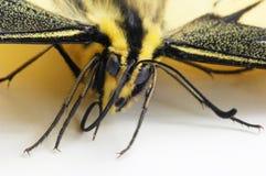часть бабочки Стоковые Изображения RF
