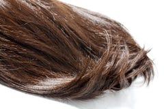 Часть волос Брайна стоковые фотографии rf