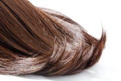 Часть волос Брайна стоковая фотография rf