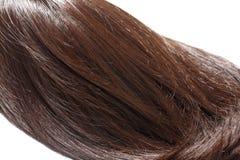 Часть волос Брайна стоковое фото