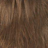 Часть волос как состав предпосылки Стоковое фото RF