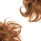 Часть волос над белизной Стоковое Изображение