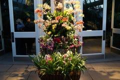 Часть 2016 выставки орхидеи 2 42 стоковое изображение rf