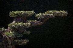 Часть дерева в саде в взгляде Стоковые Изображения RF