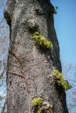 Часть дерева в саде в взгляде Стоковое Изображение