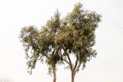 Часть дерева в саде в взгляде Стоковые Фотографии RF