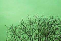 Часть дерева в саде в взгляде Стоковое фото RF