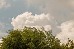 Часть дерева в саде в взгляде Стоковая Фотография