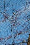 Часть дерева в саде в взгляде Стоковые Фото
