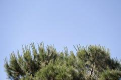 Часть дерева в саде в взгляде Стоковые Изображения