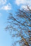 Часть дерева в саде в взгляде Стоковое Фото