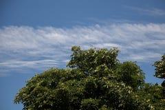 Часть дерева в саде в взгляде Стоковое Изображение RF