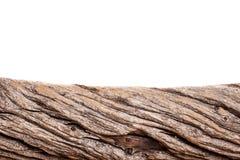 Часть дерева изолированная на белой предпосылке Стоковое фото RF