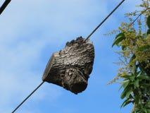 Часть дерева которая выросла вокруг линии электропередач Стоковые Фотографии RF