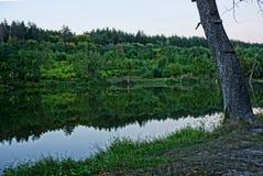 Часть дерева на береге резервуара леса Стоковые Изображения