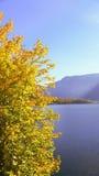 Часть дерева на озере в осени Стоковое Фото
