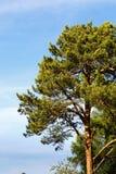 Часть дерева против неба Стоковая Фотография