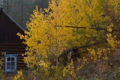 Часть деревянного дома с окном и желтыми деревьями Стоковые Фото