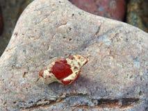 Часть естественного янтаря от моря, Литвы стоковое изображение rf