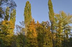 Часть естественной предпосылки от осеннего multicolor леса на голубом небе, южного парка стоковое изображение