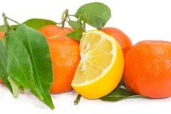 Часть лимона среди апельсинов мандарина с хворостинами и листьями Стоковое Фото