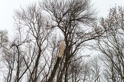 часть которая попадает без вести, сломленное деревянное дерево без treetop среди других treetops в лесе стоковые изображения