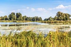Часть красивого озера около Киева в сентябре стоковая фотография