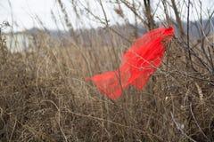 Часть красной смертной казни через повешение ткани на ветви стоковая фотография