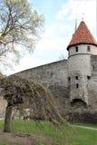 Часть крепостной стены со сторожевой башней в старом Таллине, Эстонии стоковые фото