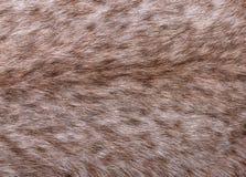 Часть меха большого сибирского рыся Стоковая Фотография