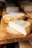 Часть молодой мягкой головы козий сыра с прессформой стоковые изображения